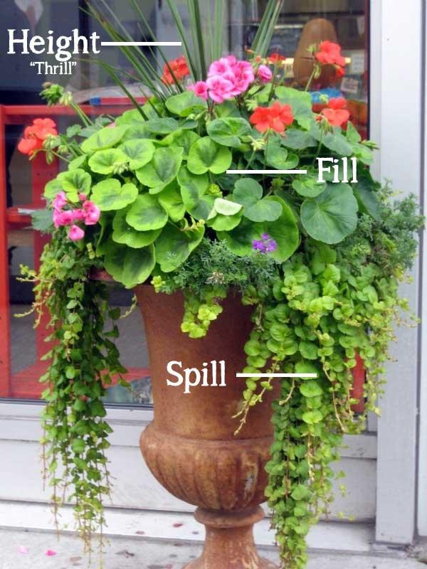 Height-Spill-Fill-Container-Gardening.jpg